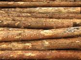 Brennholz, Kaminholz, Rundholz, Fichte, Kiefer, Lärche, Douglasie, Nadelholz, frisch, trocken, vorgetrocknet, Produktbild