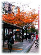 本社向かいの街路樹