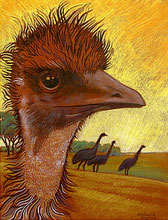 Emu As A Redhead