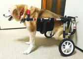 犬用車椅子 犬の車椅子 犬用車いす 犬の車いす 犬 車椅子 ドッグカート 介護 車イス 車椅子犬