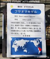 フサオマキザルの説明(神戸市立王子動物園)