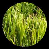 Phénomènes observés - Thématique herbe