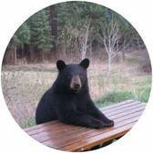 Bär Harz Natur