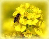 蜂蜜の疲労回復作用―はちみつの栄養効果