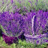 Der aromatische Lavendel eignet sich, abgefüllt in kleine Stoffsäckchen, auch als Mottenvertreiber im Kleiderschrank