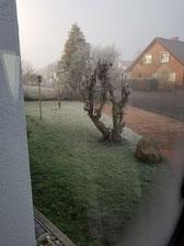 Morgendlicher Blick aus dem Womo-Fenster