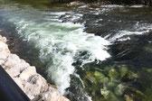 Stufe bei Niedrigwasser