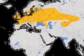 Karte zur Verbreitung des Feldschwirls (Locustella naevia) weltweit.