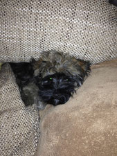 Peanut...am liebsten auf dem Sofa!