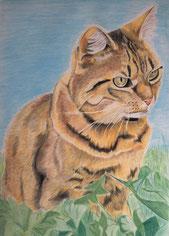 tierportrait zeichnen lassen farbig kunst meiner seele