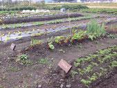 アタラタ イベント 市民農園