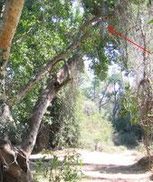 Trappola a caduta per elefanti in foresta