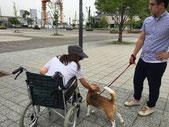 お散歩中に吠えかかっていた車椅子問題も解決!