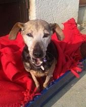 Zera 13 Jahre krankes Herz- ihr Besitzer ist gestorben. Zera lebt jetzt bei Anabella zuhause