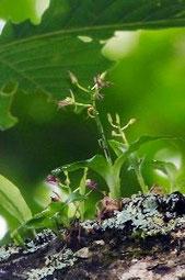 クモイジガバチ
