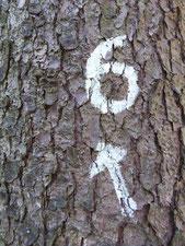 Bild: Baumnummer an dem Wanderweg