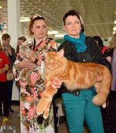 котик переехал жить в белорусский питомник Liger Cat