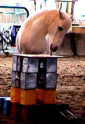 cheval peintre