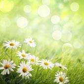 Bild: Natur & Garten SEO (Suchmaschinenoptimierung)