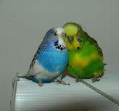 Liebe unter Wellis, Kira mit ihrem alten Partner Tweety