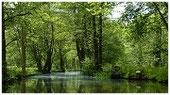 Plätze für eine Spreewald Kahnfahrt buchen