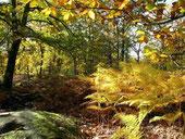 Promenades en sous bois
