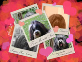 Tibet-Terrier Deckrüde Srinagar Danda Fu-Yeshi Black Jewel