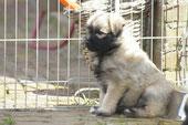 Bo ( Andre's Hund )