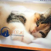 Druckatelier46 Mülch / Bern - Webseiten-Gestaltung für  Sandras Katzenpension