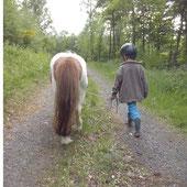 Wandern mit Pferd, Wandern im Siegerland