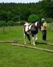 Zugarbeit Pferd Holzrücken Bodenarbeit