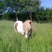 Tiergestützt, Pferdegestützt, Heilpädagogik