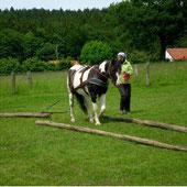 Bodenarbeit mit Pferd, Zugarbeit, Holzrücken