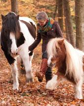 Pferd Spanischer Schritt Freiarbeit