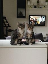 Bonny und Kitty
