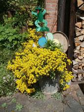 Gelbes Blumenspiel