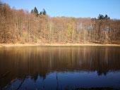Fontane und der Waldsee