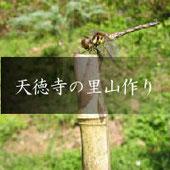 樹木葬の寺 天徳寺の里山作り