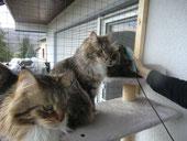 Foto Nadine Böhm © Eine Katze wird behandelt und die anderen warten schon!