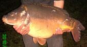 Acrocarpe: étang de pêche à la carpe en nokill
