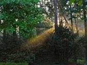 Morgenspaziergang auf dem Weyerberg