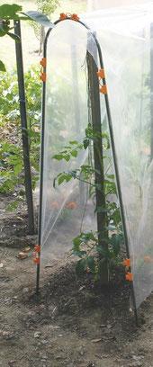 ©Nortene, Tomato Tuteur, le tuteur en acier pour la réalisation d'un tunnel haut pour les tomates.