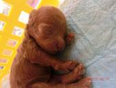 *産まれて1週間です!