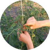 Foto von Gemüse