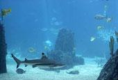 Fauna del oceano