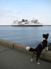 Wer hat die schönsten Urlaubsorte für Hunde? Schreibt uns, wir geben gern die Links weiter hier!