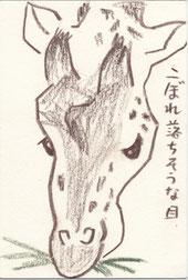 草食動物 キリン