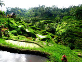 Sawah tour, adventure tour, scooter, motor bike, Bali , Java, Lombok, scooter rental, location scooter, motorbike rental, volcanoes, beaches, rice fileds, temples