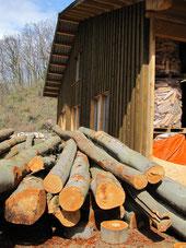 Holzstämme zur Verarbeitung bereit