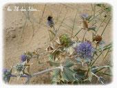 Plage de sable fin La Faute sur Mer - Ete 2013